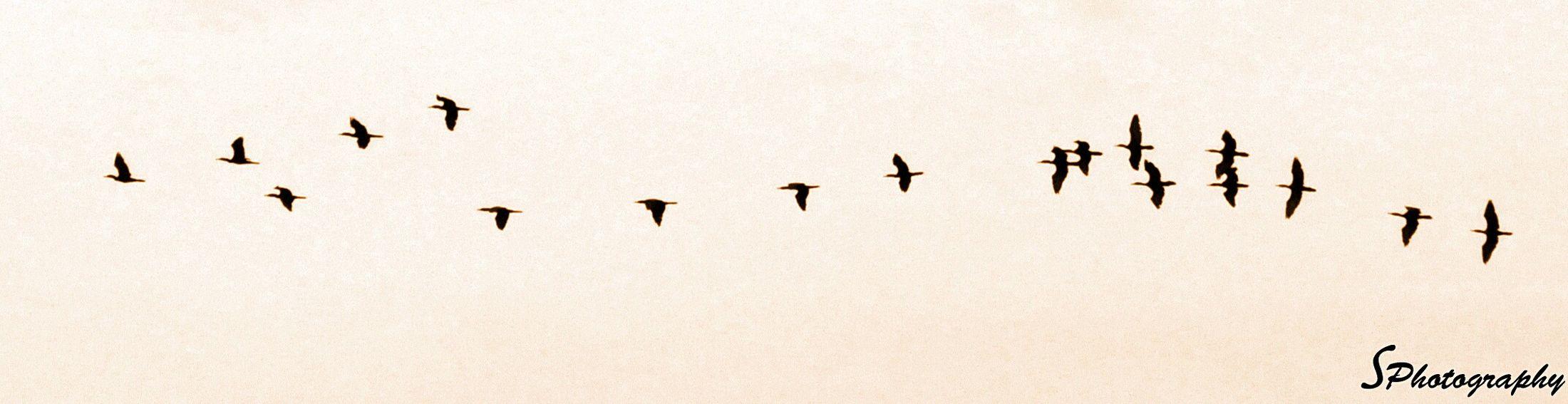 Bird Photography Birds Bird Returning Home Coordination
