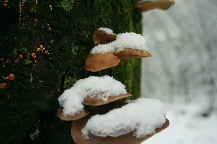 When they are covered with snow. Mushrooms are still beautiful