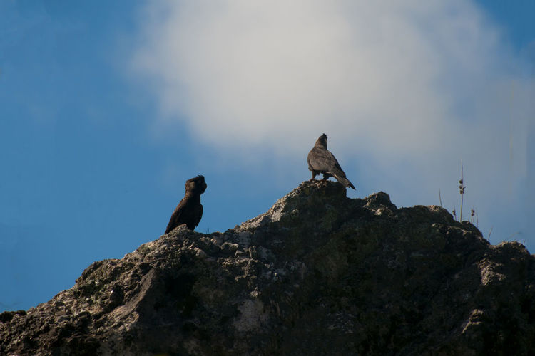 Low angle view of birds perching on rock