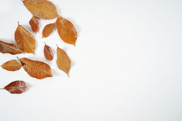 Leaf No People
