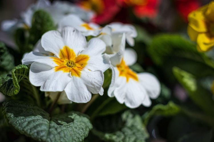 Flowers The Week On Eyem Showcase April Flower Spring Flowers