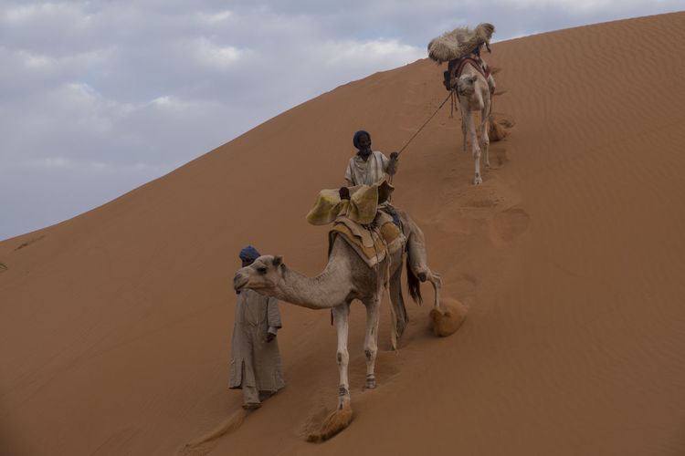 Camel Caravan is crossing in the Sahara desert Dunes North Africa Sahara Camel Caravan Dry Blue Sky And Clouds Mauritania Mammal Desert Domestic Animals Camel Sky Working Animal Nature Land Sand Travel Climate Full Length Men Arid Climate Day People Domestic Pets Outdoors