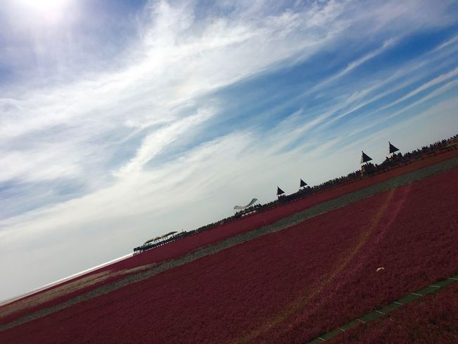 Panjing. Red beach Red Agriculture Cloud - Sky Field Tide Tidepools Tidesout Algae Redcarpet Red Flower Redfield Red Field Flower Redalgae Red Algae Red Carpet Flowers Perspectives On Nature EyeEmNewHere