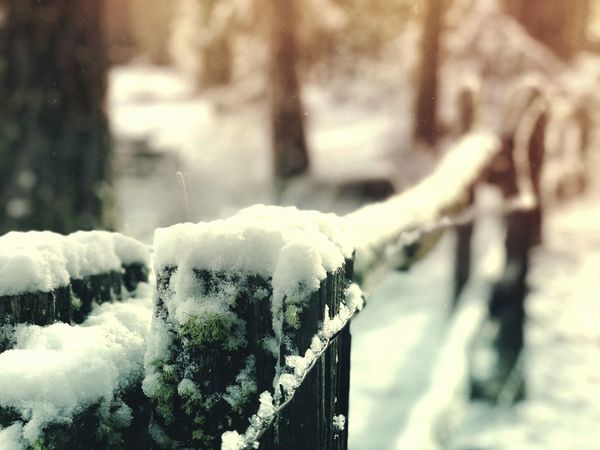 Frozen Fence. #winter Winter Snow Cold Temperature Weather Nature Focus On Foreground Shades Of Winter Frozen