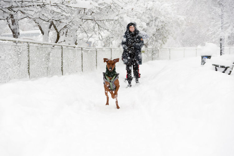 Wintertime. Activity Animal Animal Themes Child Childhood Cold Temperature Day Dog Domestic Animals Front View Full Length Fun Leisure Activity Motion Nature One Animal One Person Outdoors Pets Snow Snowing Tobogganing Walking Warm Clothing Winter Human Connection