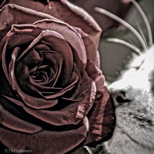 Cute Pets Nature Cats Flower Porn