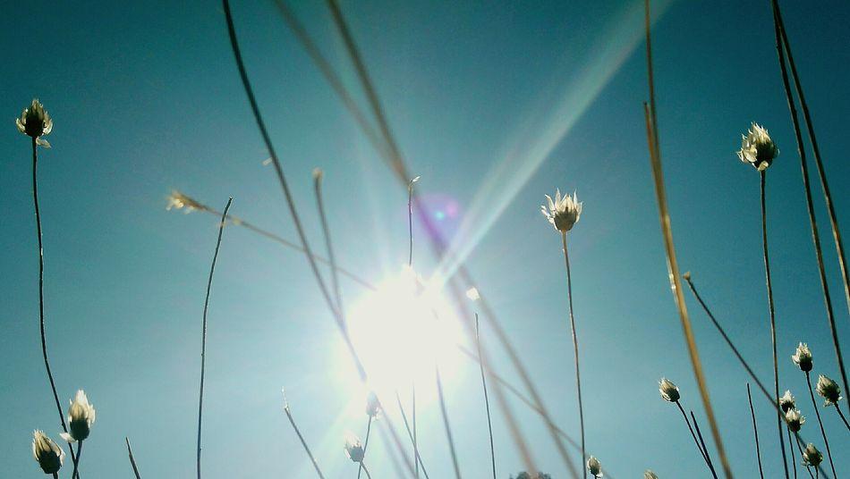 Nature Herbes Folles Windy Autumn Indian Summer Castelnau De Guers Hermitage Saint Antoine Garrigue Randonnée Ciel Et Nuages Shapes And Forms Clouds And Sky Beauty In Nature Great Outdoors Doux Air Volatile Holidays Enjoy
