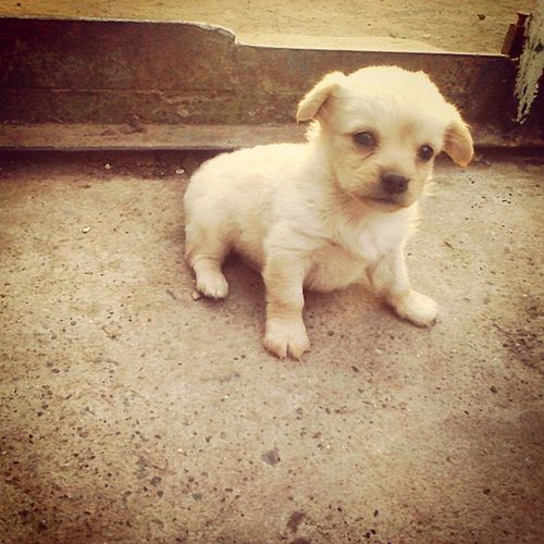 Dog Doggy Doggie Puppy Pup собака собачка щенок