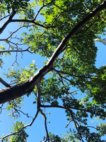 Resting Shadow Blue Sky Tree Trunk Plant Hugging A Tree Tree Plant Low Angle View Sky Beauty In Nature Branch Nature Tree Canopy  Land Sunny Blue Leaf Green Color Growth Sunlight Clear Sky Day Tranquility