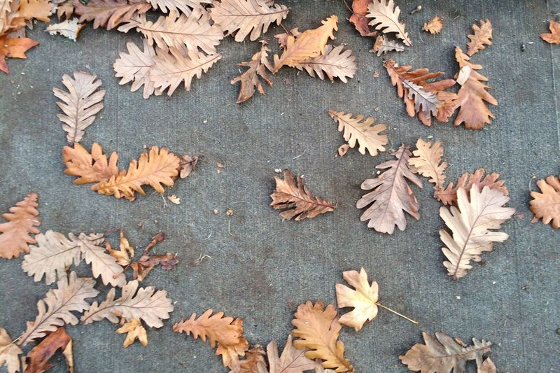From my photo archive Pattern Pieces Textures And Surfaces Fall Beauty Colors Of Autumn Fall Colors Oak Leaves Fallen Leaves