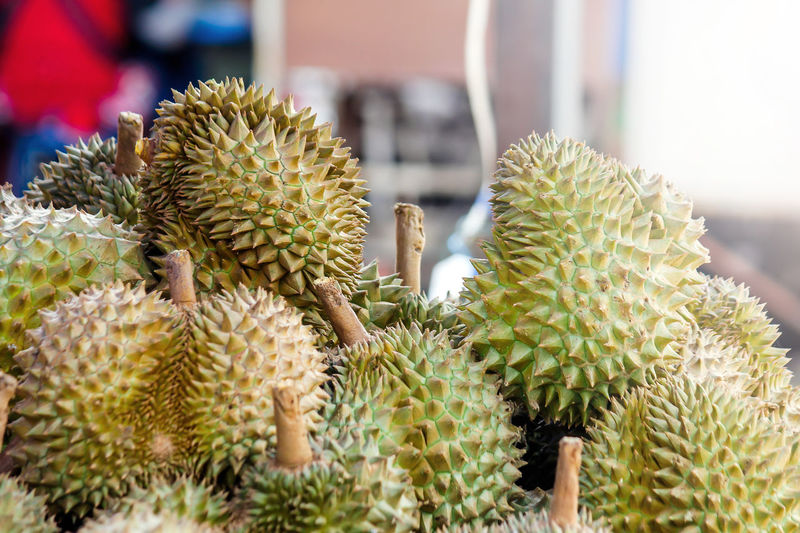Fresh exotic tropical fruit Group of Durian for sale at the market.Organic fruit on street market.Seasonal fruit.Durian is king of fruit in Asia Thailand. Dessert Durian Market Natural Soft Light Thailand Delicious Fresh Freshness Fruit Green Color Group Growth Healthy Eating King Of Fruits Organic Outdoors Plant Sea Season  Smell Street Succulent Plant Taste Tropical