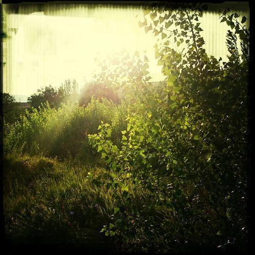 Köy Köyüm Doğa Nature Yeşil