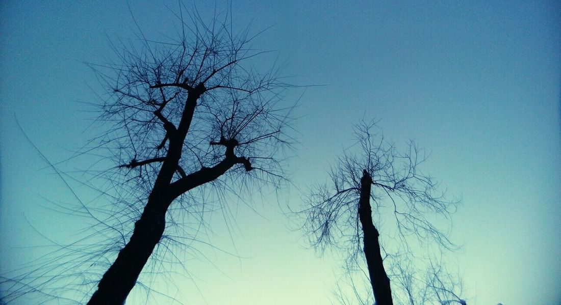Sky Sky Night Sky Through The Trees  Poetic Night Threes Night View Poetic Photography