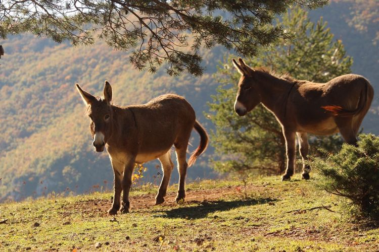 Les ânes du Monna Millau Animal Themes Nature Donkey Animals