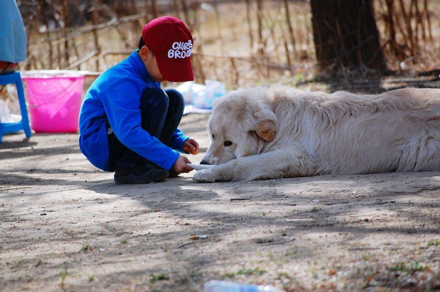 Boy Dog Relaxing Beijing, China Tongzhou Pet Photos Around You
