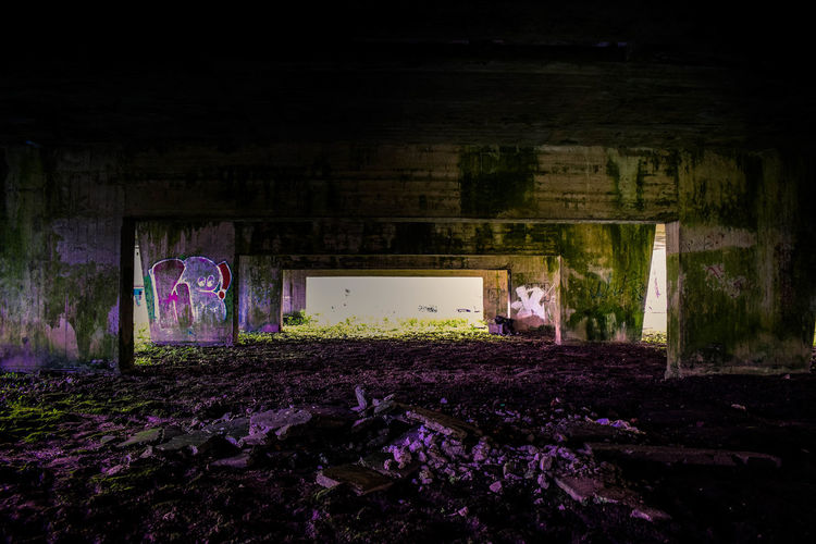 View of an abandoned and purple flowering plants at night