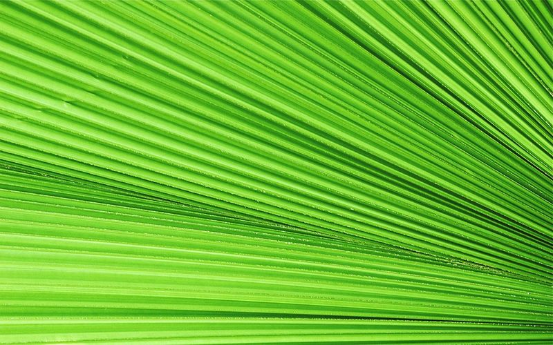 Palm Leaf Green Color Backgrounds Beauty In Nature No People Close-up Nature Lines