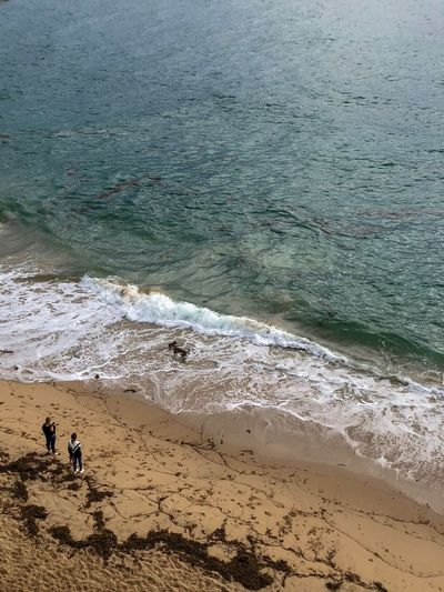 High Angle View Of People And Dogs At Beach