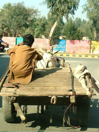 As the Childhood Struggles #poverty #streetphotography #popular # Tree Day Outdoors Sunlight Sitting Shadow Only Men One Man Only EyeEmNewHere