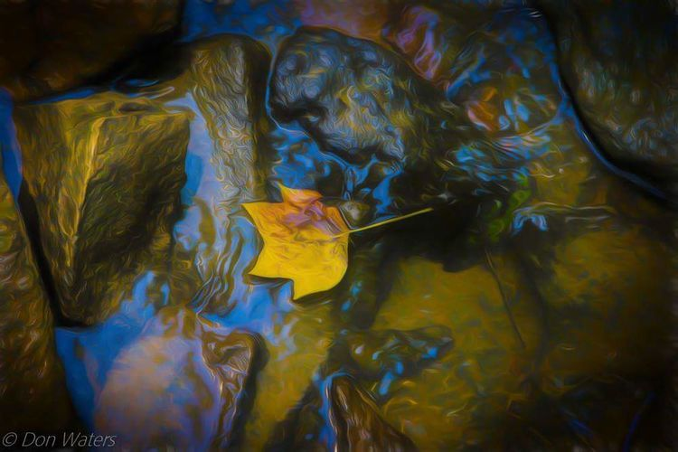 Leaf Leaf Art