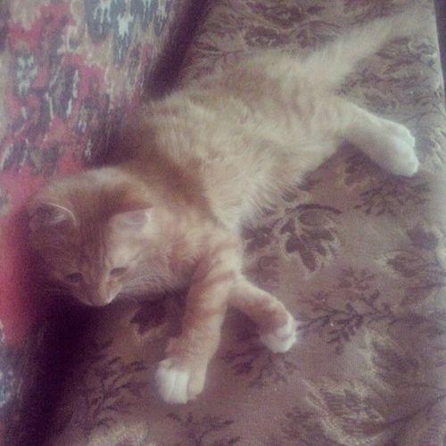 Мой_любимый_Тимон котёнок тимон