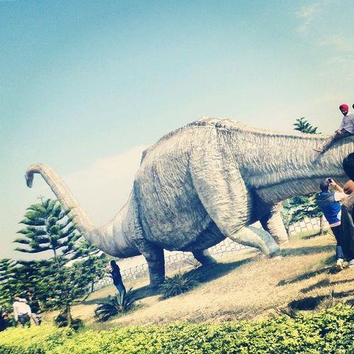 Science City Dino