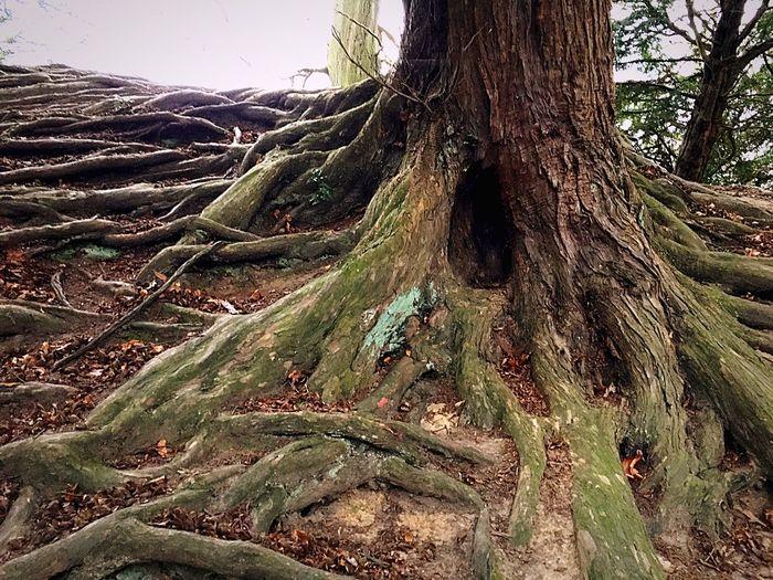 Panoramic shot of tree trunk