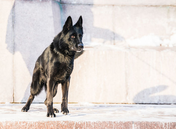 Black dog standing outdoors