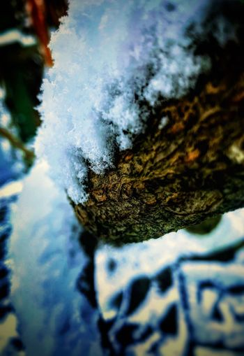 Tree Branch  Snow Winter Cold Temperature Close-up Day Outdoors