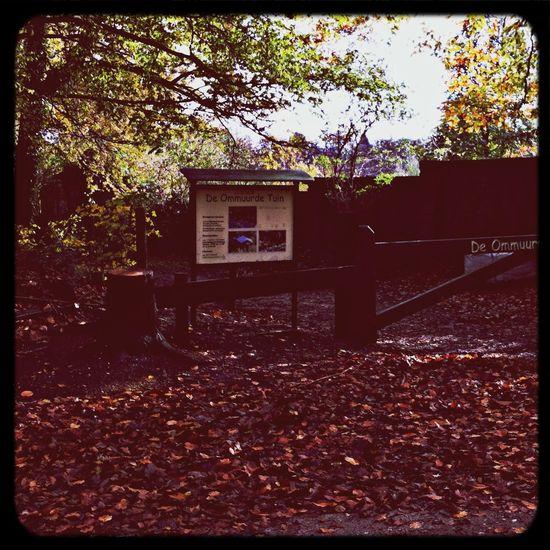 Herfst bij de Ommuurde tuin in Renkum. My City The World Around Me Herfst