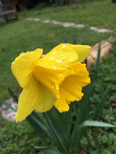 Spring Into Spring Nofilter#noedit Nature Yellow Flower Raindrops