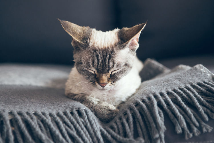 Close-up of cat resting on bed