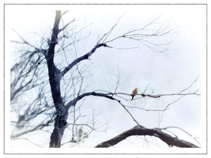 Bird Blackandwhite Tree IPhoneography