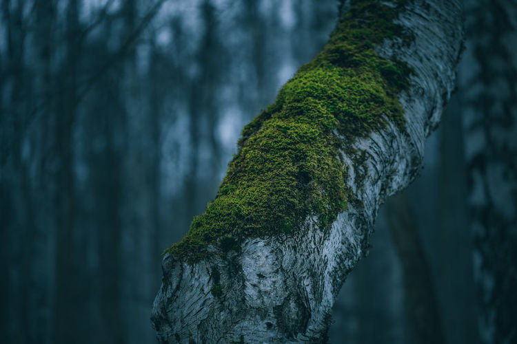 Tree Plant Tree Trunk Trunk No People Focus On Foreground Nature Moss Close-up Day Textured  Tranquility Growth Forest Outdoors Beauty In Nature Land Green Color Solid Rock