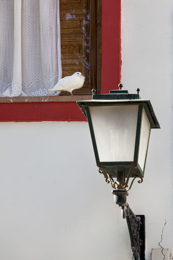 Close-up of bird perching on street light against wall