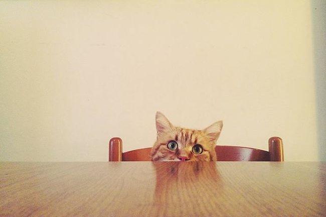 Hideandseek Cat Boo