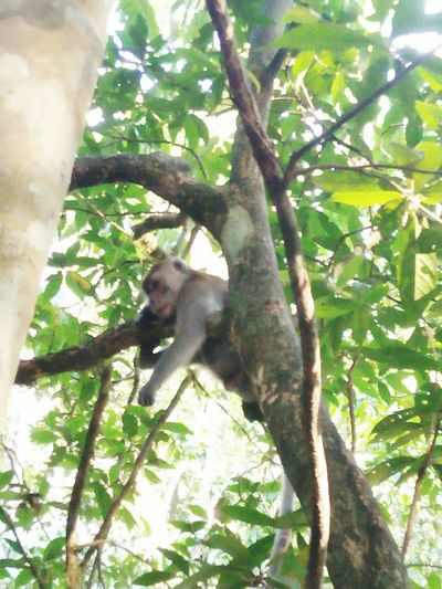 Monkey Hanging On The Tree Try To Take Something Go Higher Tree Climbing Branch Tree Trunk Sunlight Green Color