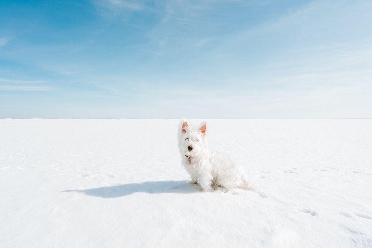 Portrait of white dog on frozen lake against sky