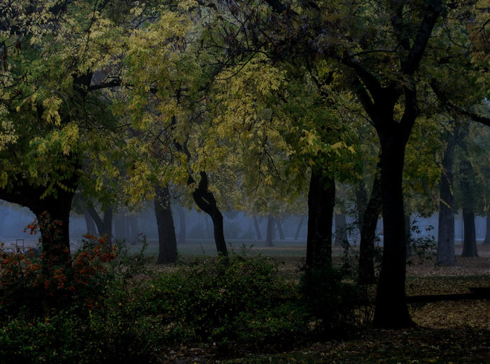 Beauty In Nature Branch Day Fog, Mist Forest Growth Land Landscape Nature No People Non-urban Scene Outdoors Plant Scenics - Nature Tranquil Scene Tranquility Tree Tree Trunk Trunk Water