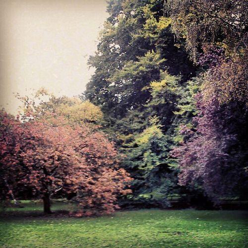 Los colores del otoño en #cardiff #nature #naturaleza #park #colors #wales #uk Wales Uk Naturaleza Cardiff Nature Colors Park