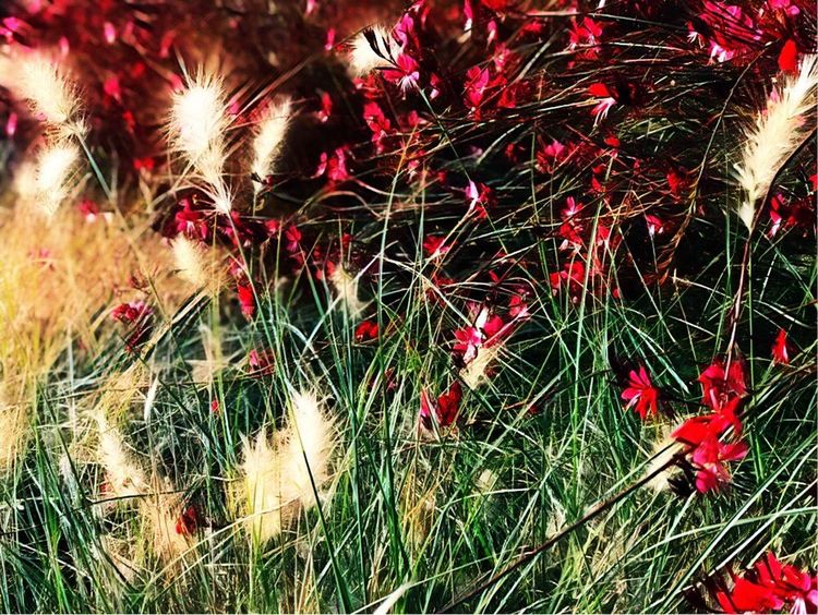 Flower Christmas Celebration Night Red Nature No People Christmas Decoration Grass Outdoors Holiday - Event Growth Illuminated Close-up