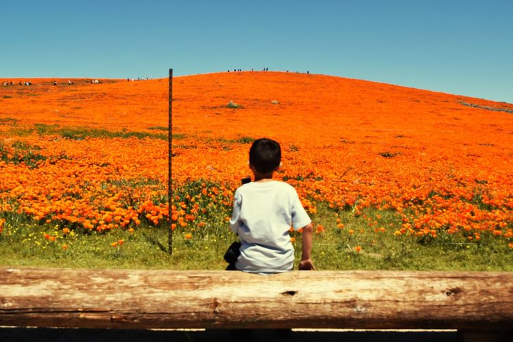 Blooming Flower Antelope Valley Poppy Reserve Sitting Rear View Clear Sky Sky Landscape Human Back Hiker