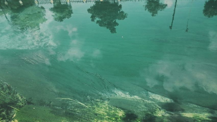 Water Tree Reflection Scenics Nature Ethereal Outdoors Standing Water Remote River VSCO Green Beauty In Nature Underwater