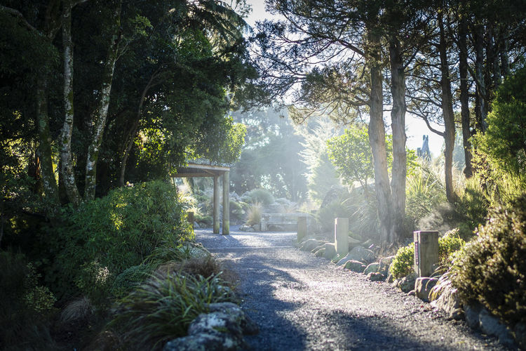 Otari Mist Beauty In Nature Cold Temperature Day Forest Growth Misty Morning Nature New Zealand Beauty No People Outdoors Plant Sunlight Tranquil Scene Tranquility Tree