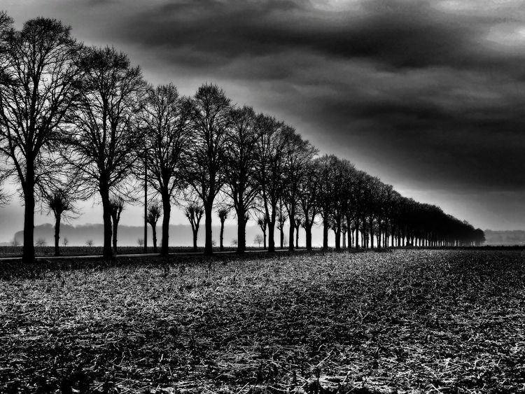 Wartezeit Autumn Beauty In Nature Black And White Cloud - Sky Field Landscape Nature No People Tree Tree Lined Avenue