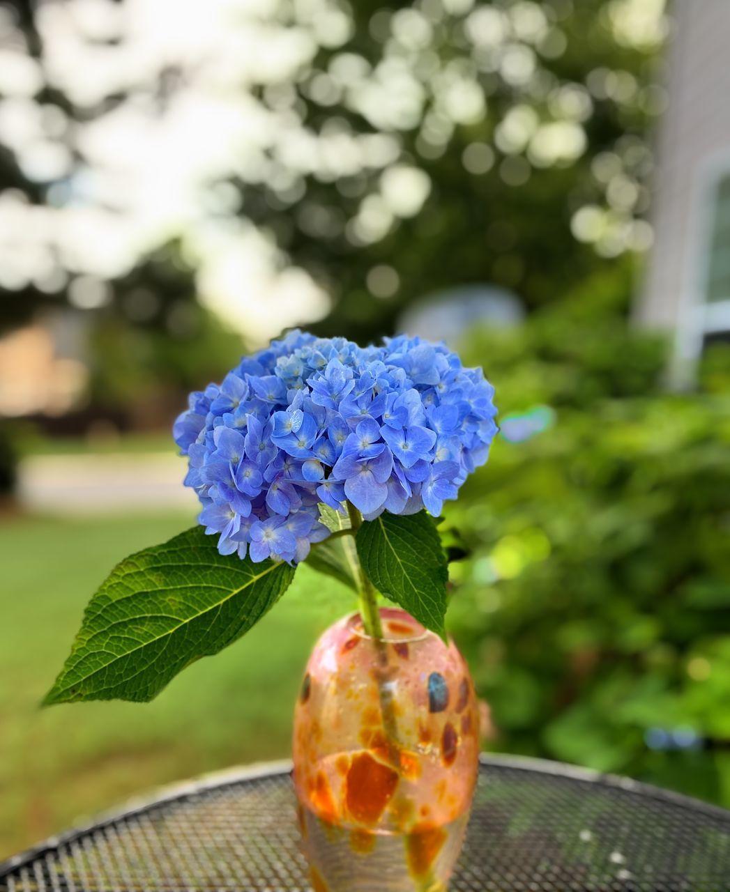 CLOSE-UP OF BLUE FLOWER IN VASE
