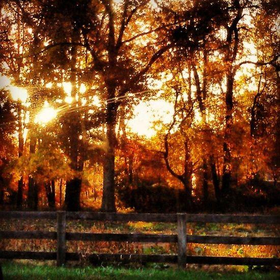 Goodmornin' y'all! Goodmornin Virginia Beautiful Fall november fallfoilage farm Fallfarm gorgeous trees leaveschanging country south pretty awesome