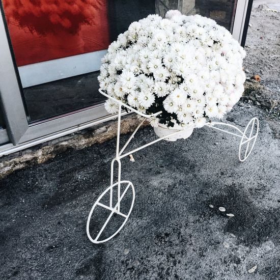 Daisy IPhoneography Vscocam VSCO Macedonia Gostivar Flowers Fall Beauty EyeEm Best Shots Getty