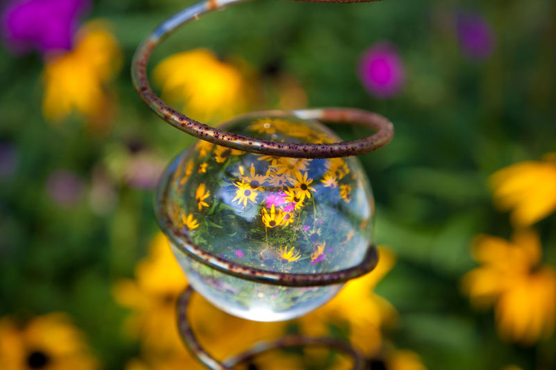 Nature Nature Photography Perspectives On Nature Reflection Beauty In Nature Black Eyed Susan Black Eyed Susans Close-up Day Flower Focus On Foreground Fragility Growth Hanging Nature_collection No People Outdoors Plant The Still Life Photographer - 2018 EyeEm Awards