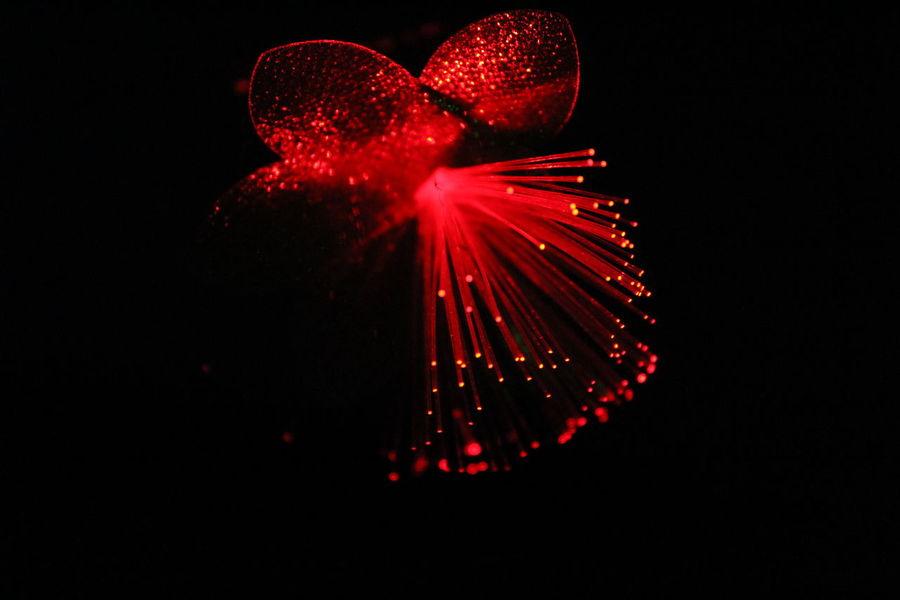 Fiber optic lights.. Black Background Celebration Close-up Fiber Optic Lamps Illuminated Lighting Equipment Night No People Red